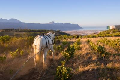 b2ap3_thumbnail_Waterkloof-Estate-with-horse-and-view-LR2-4.jpg